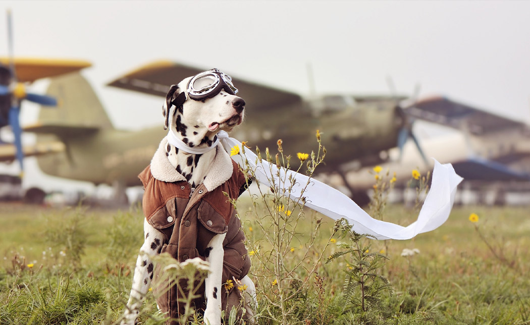 Checklist for Flying with Pets on a Private Flight